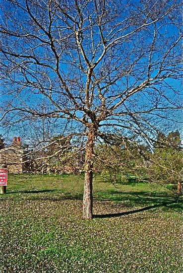 At Mistletoe Sculpture Garden