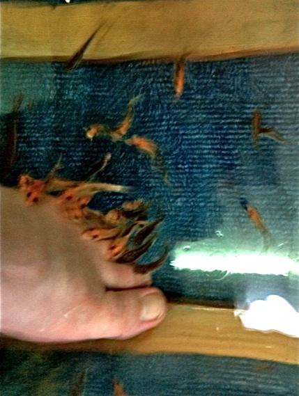 Fish therapy, Chiang Mai